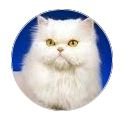 Kitty.JPG Glamour Paws