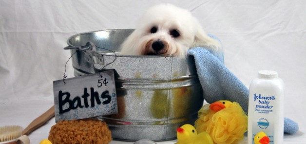 dog grooming bath